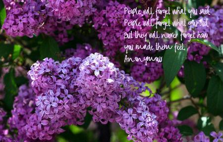 lilac-thanks