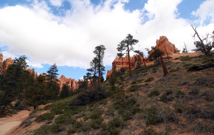 canyonfloor
